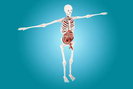 scrotum: anatom�a humana