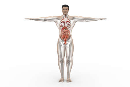 ejaculatory: human anatomy Stock Photo