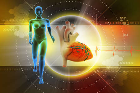 female human body and heart photo