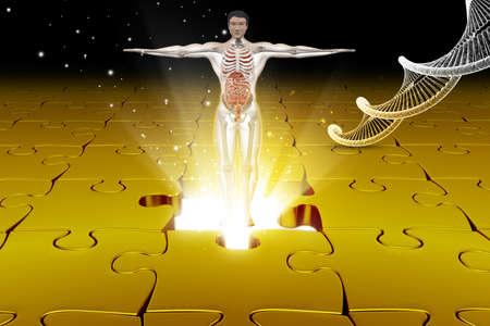 midsagittal: human anatomy with dna