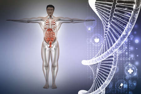human anatomy with dna
