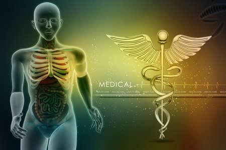human anatomy and caduceus sign Stock Photo