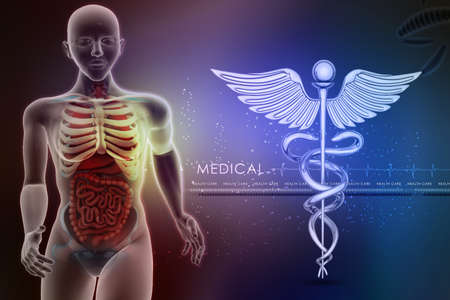 midsagittal: human anatomy and caduceus sign Stock Photo