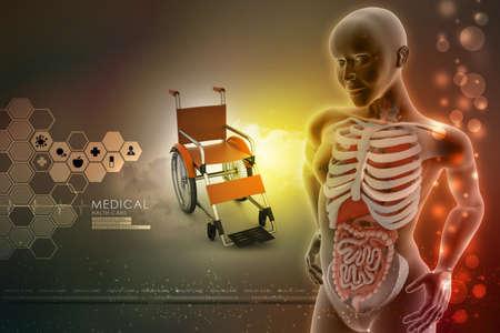 midsagittal: human anatomy Stock Photo