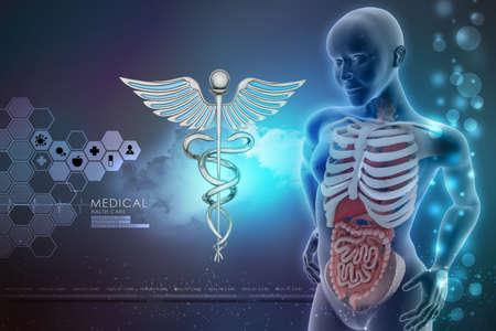 human anatomy and caduceus sign photo