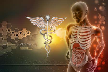 urogenital membrane: human anatomy and caduceus sign Stock Photo