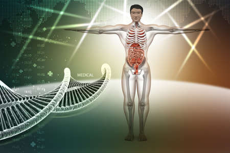 suspensory: human anatomy with dna