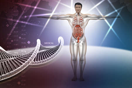 ejaculatory: human anatomy with dna