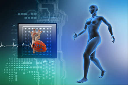 stamina: female human body and heart