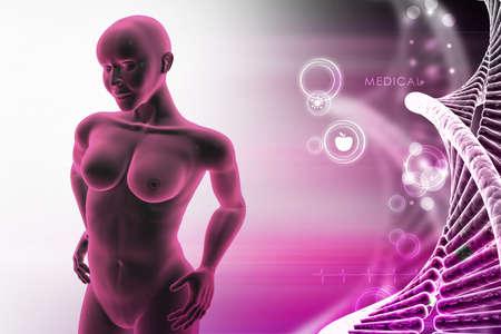 stamina: woman female human body