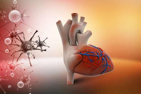 physiology: Human heart