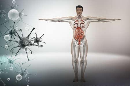 scrotum: anatom�a humana con el virus