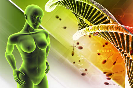 erectile: Human female anatomy with DNA and sperm in color background
