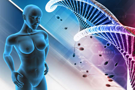 suspensory: Human female anatomy with DNA and sperm in color background