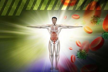 bellyache: Human digestive system with, blood cells and virus in color background