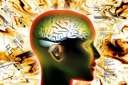 percepción: representation of female brain Foto de archivo