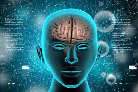 representation of human brain Stock Photo