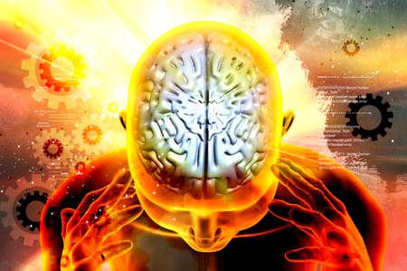 여성 두뇌의 표현
