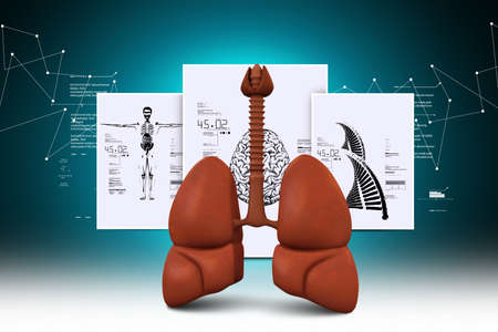 asthmatic: Human lungs Stock Photo