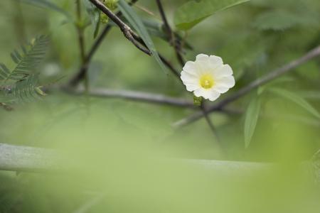 yellow flower Green background blur Stock Photo