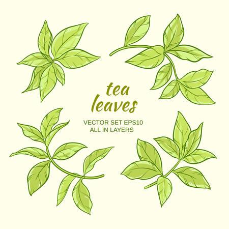 feuilles de thé vert vector set