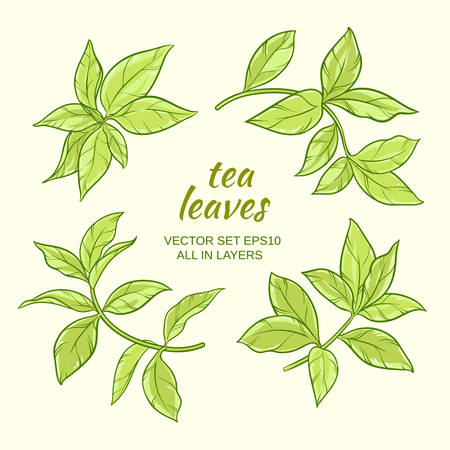 green tea leaves vector set