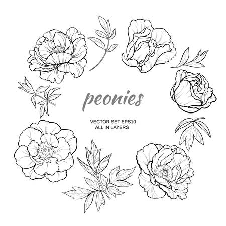 flower decoration: vector set with peonies on white background