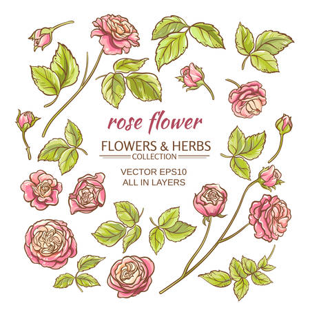 pink floral: rose elements vector set on white background