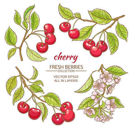 cherry vector set  on white background