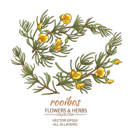 branch of rooibos on white background Illustration