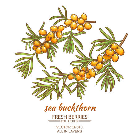 sea buckthorn  on white background
