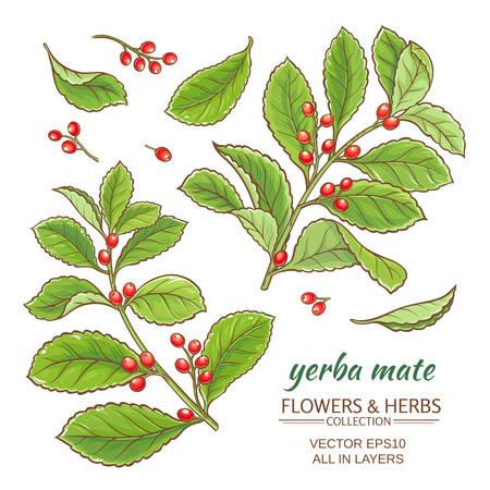 Vektor-Illustration mit Yerba Mate auf weißem Hintergrund