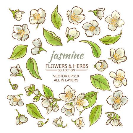 jazmín flores conjunto de vectores en el fondo blanco