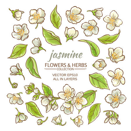 jasmine flowers vector set on white background