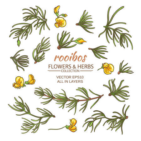 rooibos: rooibos leaves and flowers vector set on white background