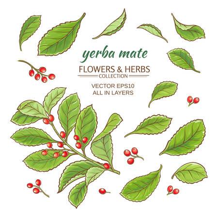 yerba mate: ilustración vectorial con yerba mate en el fondo blanco