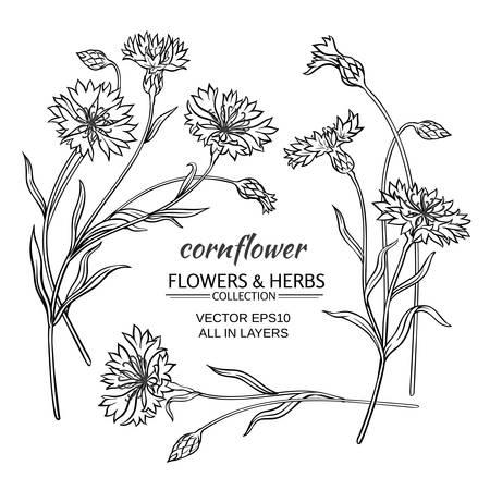 cornflower vector set on  white background Illustration