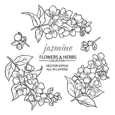 jasmine flowers set  on white background Illustration