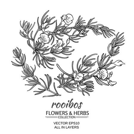 rooibos branch vector set on white background