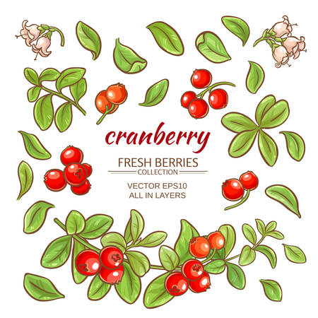 cranberry elements vector set on white background Vettoriali