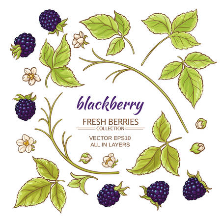 blackberry elements vector set on white background Imagens - 62425953