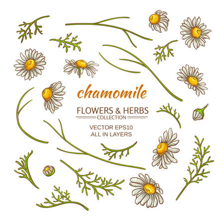 camomile tea: chamomile elements vector set on white background