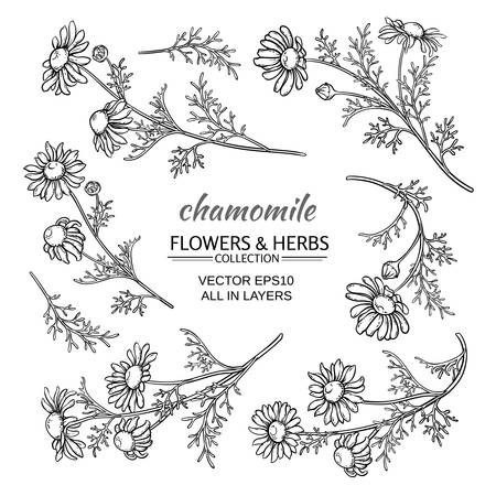 camomile tea: chamomile flowers vector set on white background