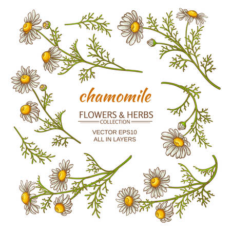 chamomile flowers vector set on white background