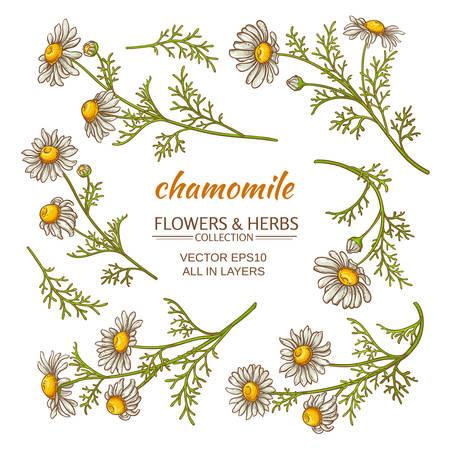 camomile tea: chamomile flowers vector set on white background