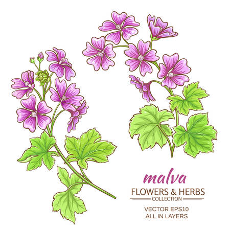 malva flowers vector set on white background Иллюстрация
