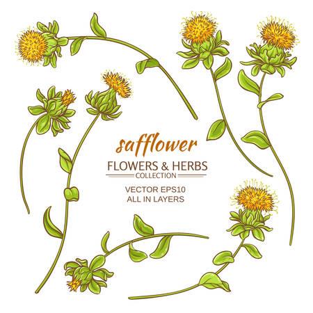 safflower plant vector set on white background Vectores
