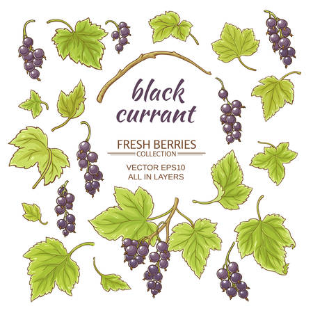 currant: black currant elements set on white background