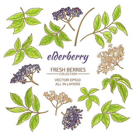 elderberry elements set on white background