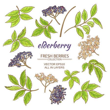 elderberry elements set on white background